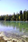 Fluss neben Wald Lizenzfreie Stockbilder