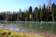 Fluss neben Wald Lizenzfreies Stockfoto