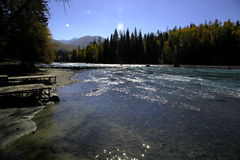 Fluss neben Wald lizenzfreie stockfotografie