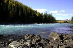 Fluss neben Wald Stockfotos