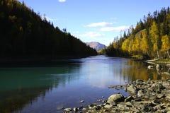 Fluss neben Wald Stockfotografie