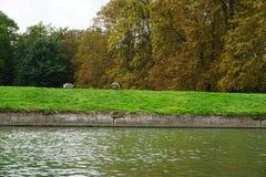 Fluss-Nocken England Stockfotografie