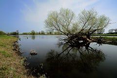 Fluss ODER Lizenzfreies Stockfoto