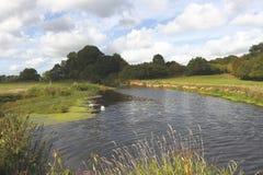 Fluss-Otter, Tipton Johannes, Devon Stockbild