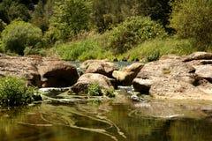 Fluss schaukelt in das mittlere eines Waldes Stockfoto