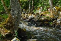 Fluss in Schweden Stockbilder