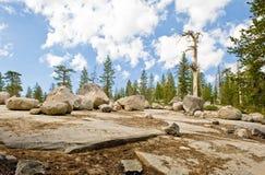 Fluss-Steine durch szenischen Wald Stockfotos