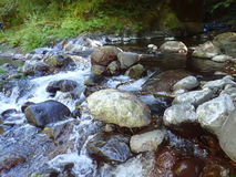 Fluss-Stromschnellen Lizenzfreies Stockfoto