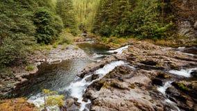 Fluss-Szene im Wald Lizenzfreies Stockfoto