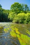Fluss thaya in Österreich Lizenzfreies Stockfoto