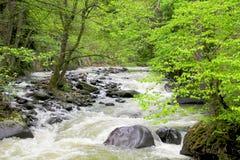 Fluss tief im Gebirgswald stockfoto