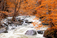 Fluss tief im Gebirgswald lizenzfreies stockfoto