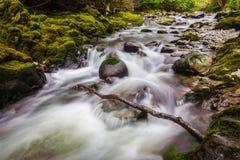 Fluss in Tollymore Forest Park lizenzfreies stockfoto