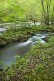 Fluss, Tremont, großes rauchiges Mtns NP Lizenzfreies Stockfoto