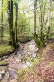 Fluss umgeben durch Bäume stockfotografie
