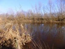 Fluss und Büsche, Northumberland, Großbritannien Stockfotos