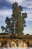 Fluss und Baum Lizenzfreie Stockbilder
