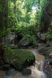 Fluss und Dschungel am heiligen Affen Forest Sanctuary, Ubud, Ba Lizenzfreie Stockfotografie