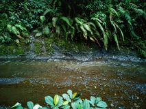 Fluss und flora& x27; s lizenzfreie stockbilder