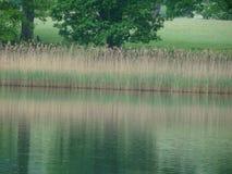 Fluss- und Grasreflexion Stockfoto