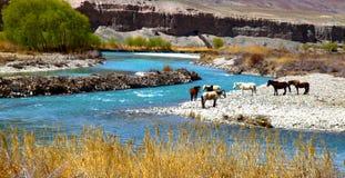 Fluss und Pferde Stockfoto