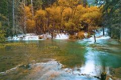 Fluss und roter Wald Stockbilder