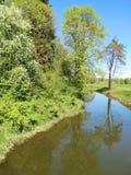Fluss und schöne Frühlingsbäume Stockbilder