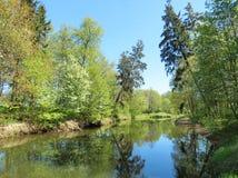 Fluss und schöne Frühlingsbäume Lizenzfreies Stockbild