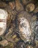 Fluss und Steine Lizenzfreie Stockbilder