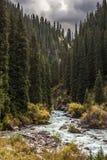 Fluss und Wald Stockfotos