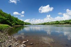 Fluss und Wald lizenzfreie stockbilder