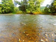Fluss und Wald Lizenzfreies Stockfoto