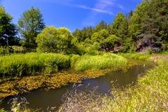 Fluss und Wald im Sommer Lizenzfreie Stockbilder