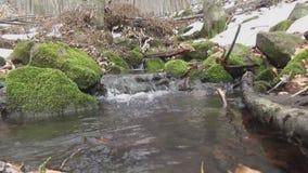 Fluss und Wasserfall im Winter im Wald mit Moos stock footage