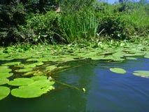 Fluss Veleka Lizenzfreie Stockfotos