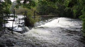 Fluss-Verdammung im Wald stock video