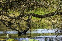 Fluss-Vogel Stockfoto