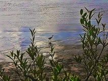 Fluss vogel Stockfoto