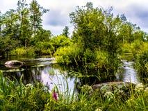 Fluss Vuoksa Stockfoto
