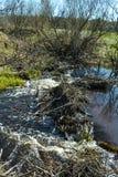 Fluss wird durch eine Biberverdammung blockiert stockbilder