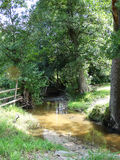 Fluss zwischen Bäumen stockfotos