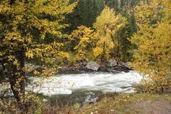 Fluss zwischen gelben Bäumen Stockbilder