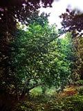 Flussansicht durch Bäume Lizenzfreie Stockfotos