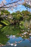 Flussansicht durch Kirschblüte Stockfotos
