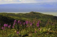 Flussansicht mit wilden Blumen Lizenzfreies Stockfoto