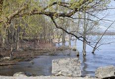 Flussbank Lizenzfreies Stockfoto