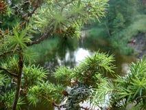 Flussbank mit Bäumen an einem wunderbaren Sommertag stockbild