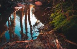 Flussbett mit einer Reflexion Stockfotografie