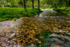 Flussdurchläufe zwischen den Bäumen Stockfotos