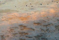 Flusseis bei Sonnenuntergang Stockbild